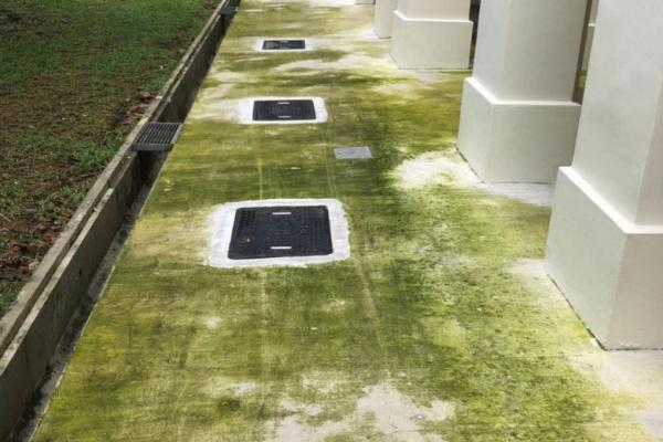 Town Council blames algae growth at Woodlands block on poor workmanship