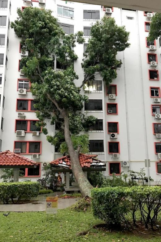 Tree falls on HDB block, shattering windows and air con compressors